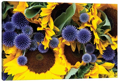 Allium And Sunflowers Canvas Art Print