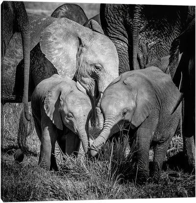 Elephant Family Group Canvas Art Print