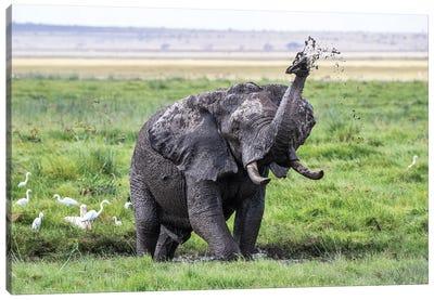 Elephant Taking A Mud Bath, Amboseli Canvas Art Print