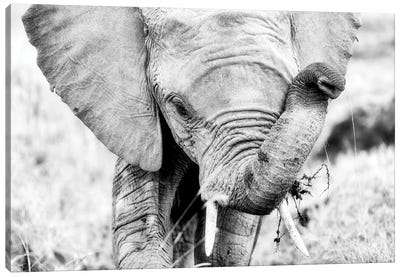 Baby Elephant, Black And White Canvas Art Print