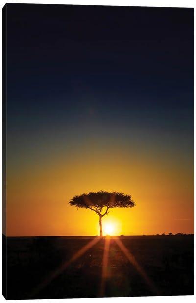 Acacia Tree On The Horizon At Sunset, Masai Mara Canvas Art Print