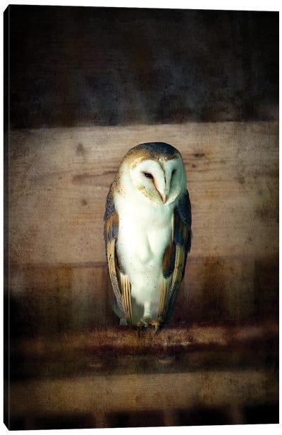 Barn Owl, Vintage Style Canvas Art Print