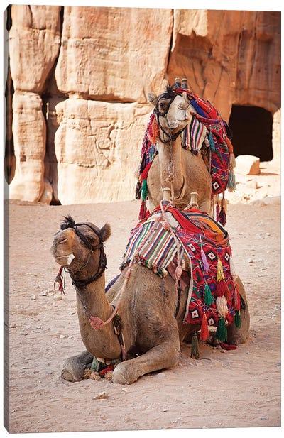 Camels In Petra, Jordan Canvas Art Print