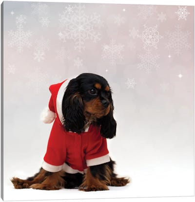 Cavalier King Charles Spaniel With Christmas Background Canvas Art Print