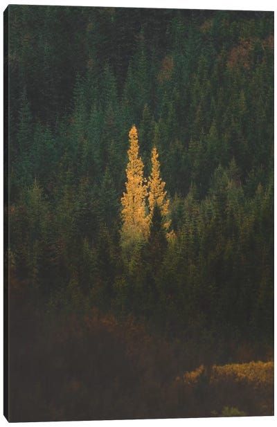 First Signs Of Autumn II Canvas Art Print