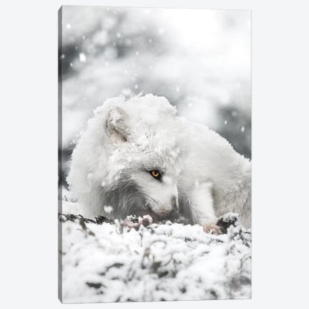 Snacking In The Snow Canvas Print #JSH26} by Joe Shutter Canvas Artwork