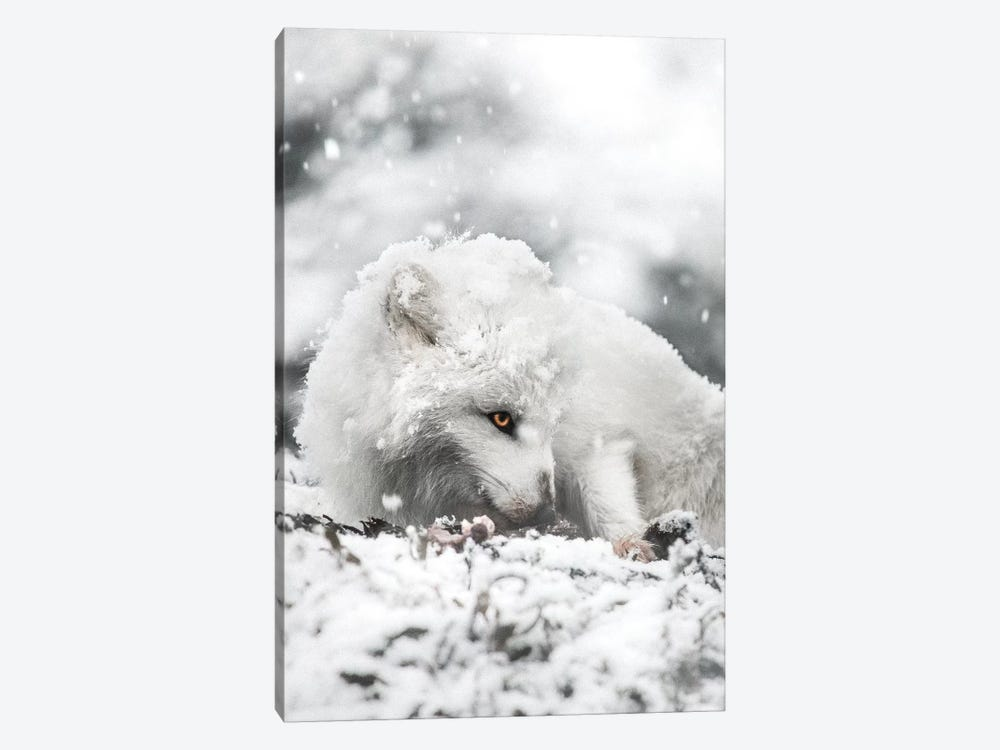 Snacking In The Snow by Joe Shutter 1-piece Canvas Wall Art