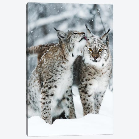 Togetherness Canvas Print #JSH40} by Joe Shutter Canvas Art Print