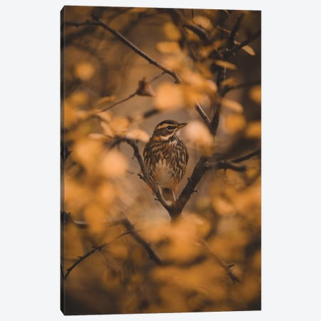 Voices In The Leaves Canvas Print #JSH42} by Joe Shutter Art Print