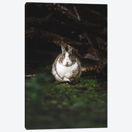 Wet Bunny Canvas Print #JSH45} by Joe Shutter Canvas Art