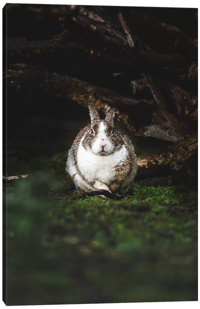 Wet Bunny Canvas Art Print