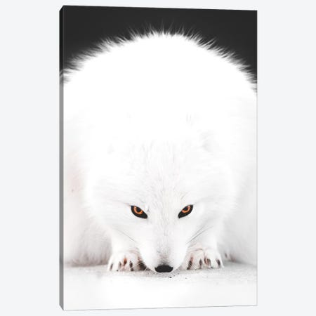White Fox I Canvas Print #JSH46} by Joe Shutter Canvas Artwork