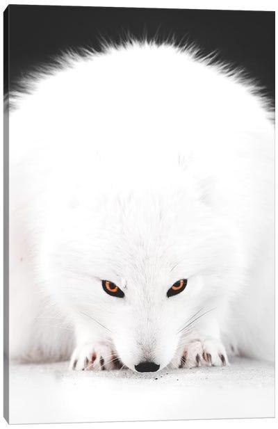 White Fox I Canvas Art Print