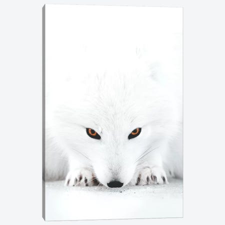 White Fox II Canvas Print #JSH47} by Joe Shutter Canvas Wall Art