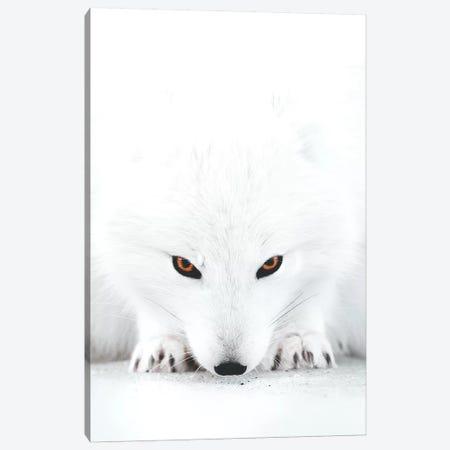 White Fox II Canvas Print #JSH47} by Joe Shutter Canvas Wall Art