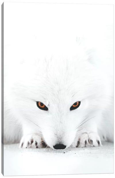 White Fox II Canvas Art Print