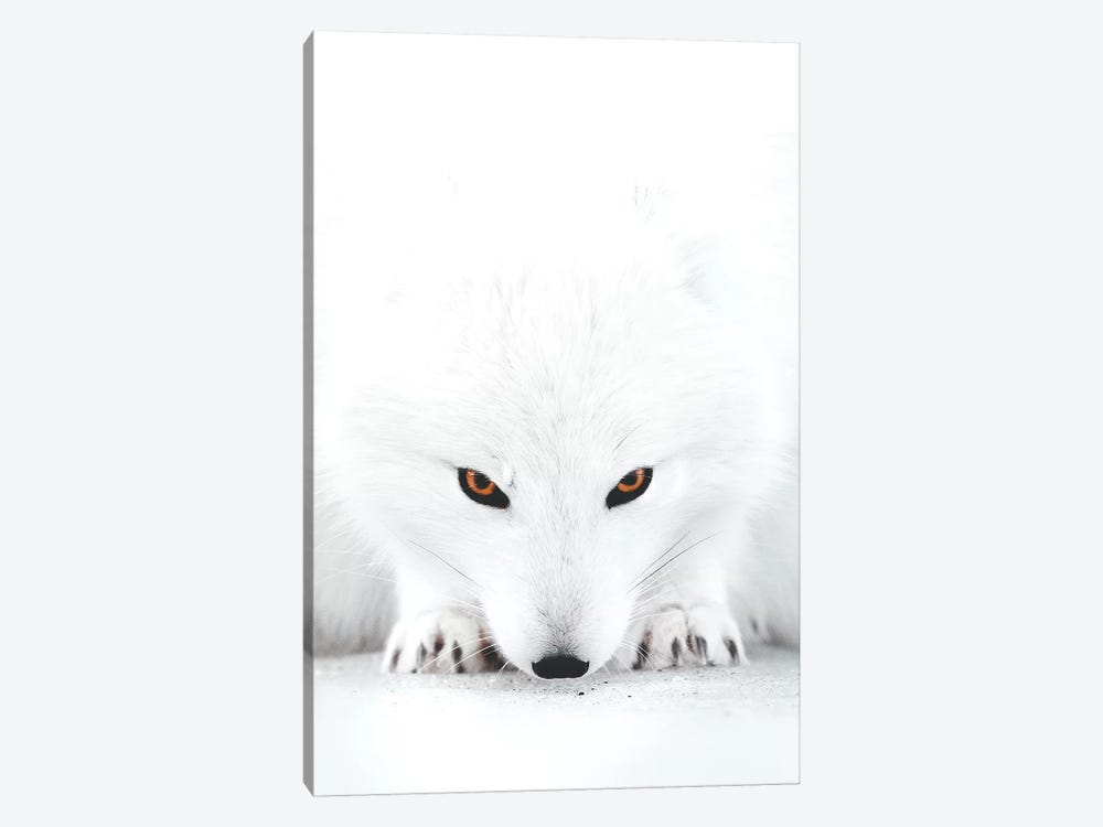 White Fox II by Joe Shutter 1-piece Art Print