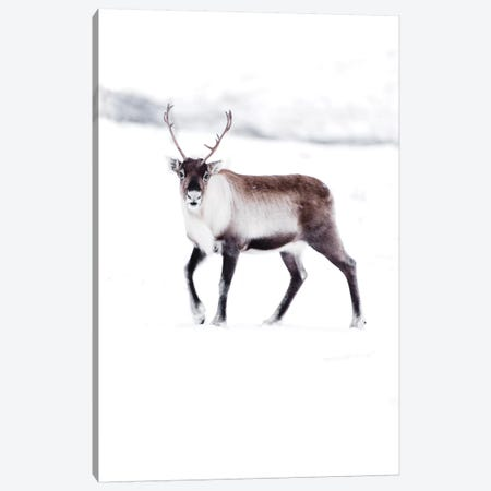 Arctic Reindeer Canvas Print #JSH4} by Joe Shutter Canvas Art Print