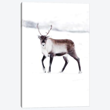 Arctic Reindeer Canvas Print #JSH4} by Joe Shutter Canvas Art Print