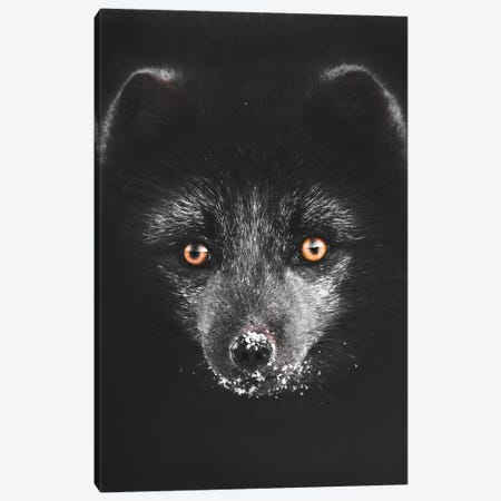 Black Fox Canvas Print #JSH5} by Joe Shutter Canvas Art Print