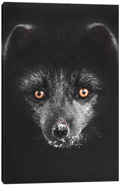 Black Fox Canvas Art Print