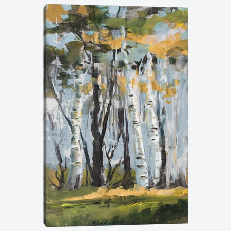 Golden Birch Trees Canvas Print #JSL100} by Jane Slivka Canvas Artwork