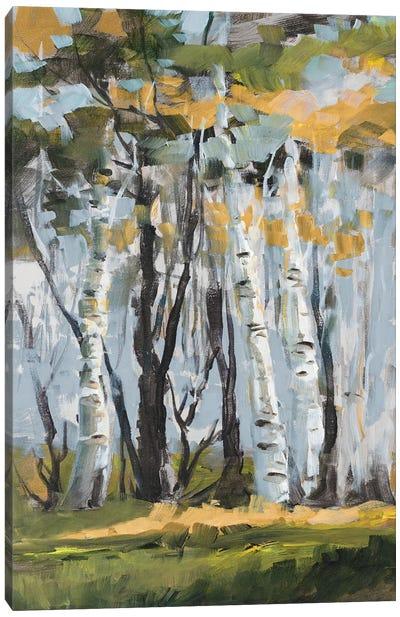 Golden Birch Trees Canvas Art Print