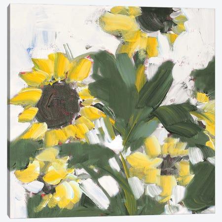 Sunflower Garden Canvas Print #JSL109} by Jane Slivka Canvas Wall Art
