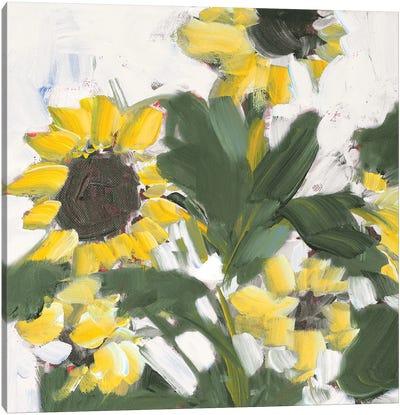 Sunflower Garden Canvas Art Print