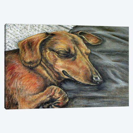 Dachshund Napping Canvas Print #JSM24} by Jay Schmetz Canvas Print