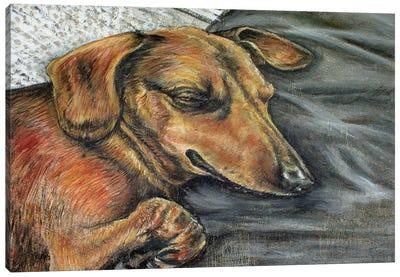 Dachshund Napping Canvas Art Print
