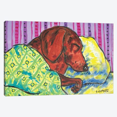 Dachshund Sleeping Canvas Print #JSM25} by Jay Schmetz Canvas Print
