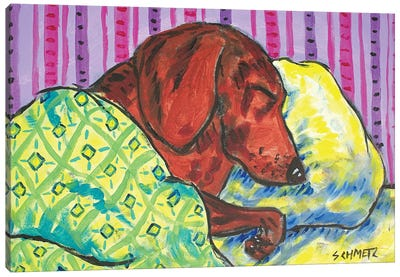 Dachshund Sleeping Canvas Art Print