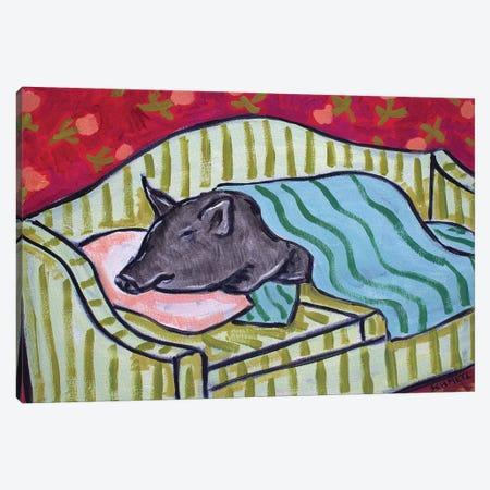 Pot Belly Pig Nap On Couch Canvas Print #JSM51} by Jay Schmetz Art Print