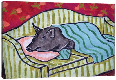 Pot Belly Pig Nap On Couch Canvas Art Print