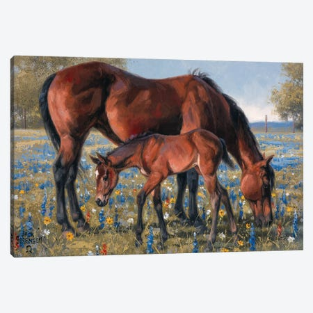 Wildflower Canvas Print #JSO12} by Jack Sorenson Art Print