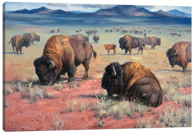 Home On The Range Canvas Art Print