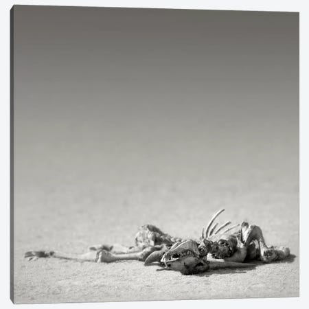 Eland Skeleton In Desert Canvas Print #JSW10} by Johan Swanepoel Canvas Art Print