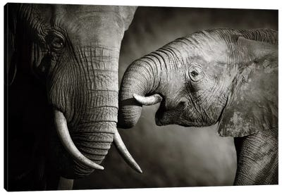 Elephant Affection Canvas Art Print