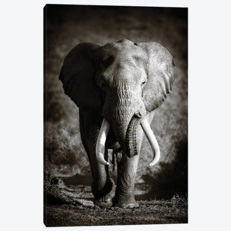Elephant Bull 3-Piece Canvas #JSW13} by Johan Swanepoel Canvas Print