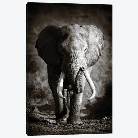 Elephant Bull Canvas Print #JSW13} by Johan Swanepoel Canvas Print