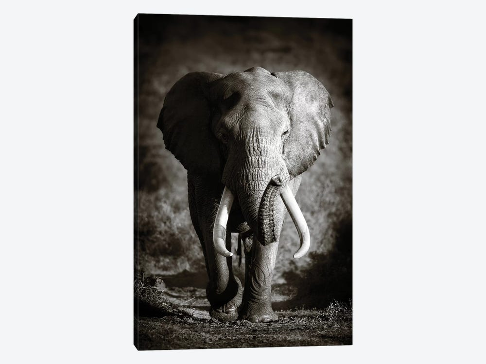 Elephant Bull by Johan Swanepoel 1-piece Art Print