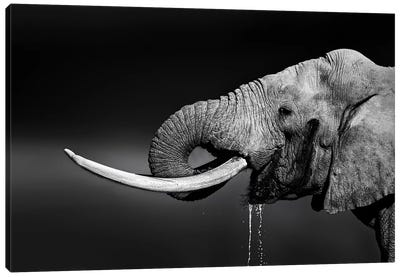 Elephant Bull Drinking Water Canvas Art Print