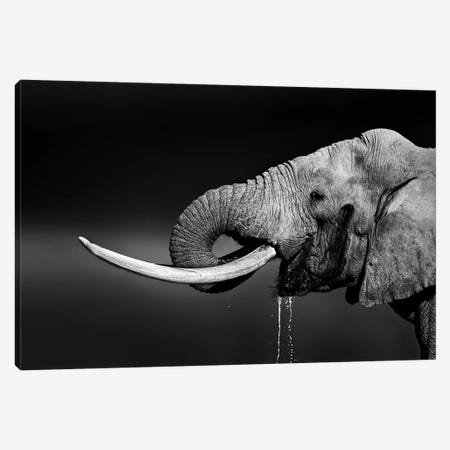 Elephant Bull Drinking Water Canvas Print #JSW14} by Johan Swanepoel Canvas Artwork