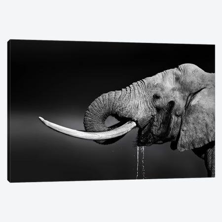 Elephant Bull Drinking Water Canvas Print #JSW14} by Johan Swanepoel Canvas Artwork