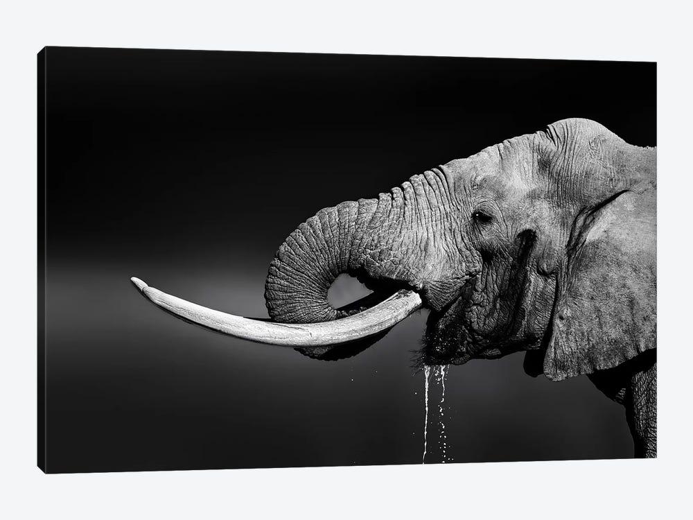 Elephant Bull Drinking Water by Johan Swanepoel 1-piece Canvas Wall Art