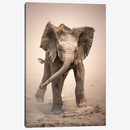 Elephant Calf Mock Charging Canvas Print #JSW15} by Johan Swanepoel Canvas Wall Art
