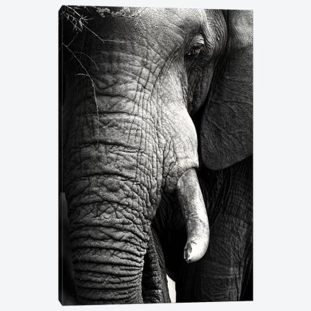Elephant Close-Up Portrait Canvas Print #JSW16} by Johan Swanepoel Canvas Artwork