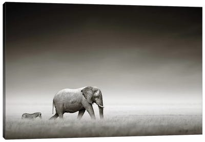 Elephant With Zebra Canvas Art Print