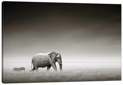Elephant With Zebra Canvas Art Print